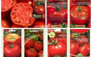 Ранние сорта помидор: лучшие сорта, как и когда сажать с фото