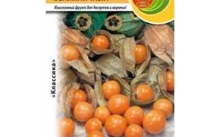 Как вырастить физалис из семян в домашних условиях: посадка и ухода с видео
