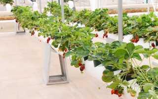Выращивание клубники в трубах ПВХ горизонтально: как сделать грядку с видео