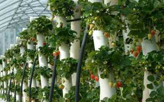 Вертикальные грядки для клубники: как сделать своими руками на даче с фото