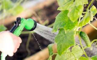 Вянут листья у огурцов в теплице: что делать, чем обработать для лечения