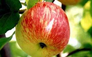 Яблоня Боровинка: описание и характеристики, история сорта, выращивание и уход