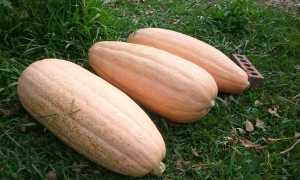 Тыква Розовый банан: характеристика и описание сорта, урожайность с фото
