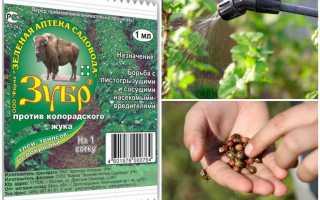 Зубр от колорадского жука: инструкция по применению средства