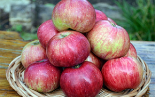 Яблоня Анис: описание гибридного сорта и подвидов, выращивание и уход с фото