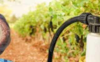 Обработка винограда после дождя в июле: чем опрыскать и обработать