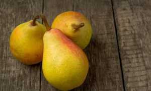 Видная груша: описание и характеристики сорта, выращивание и уход с фото
