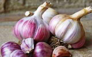 Чеснок Алькор: описание и характеристика сорта, отзывы садоводов с фото