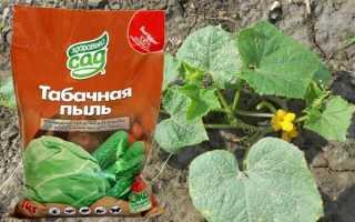 Табачная пыль: применение для огурцов, можно ли посыпать