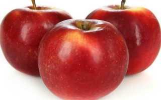 Яблоня Моди: описание сорта и характеристики, урожайность, посадка и уход с фото