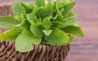 Заготовка мяты и мелиссы на зиму: 10 лучших рецептов, хранение в домашних условиях
