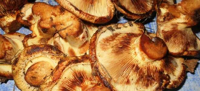 Как мариновать коровники грибы на зиму: рецепты в домашних условиях с фото