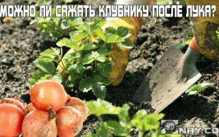 Можно ли садить клубнику после чеснока и наоборот