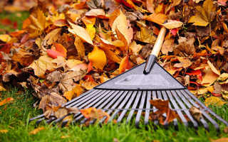 Опавшие листья в саду: особенности, нужно ли убирать