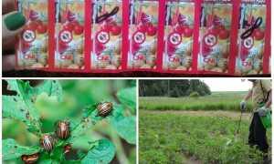 Колорадо от колорадского жука: инструкция по применению