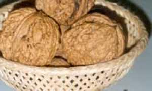 Опылитель для ореха Садко