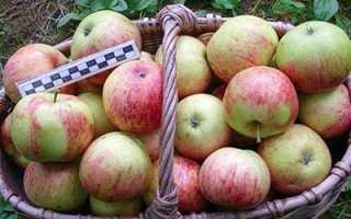 Яблоня Орлинка: описание и характеристики сорта, посадка, выращивание и уход