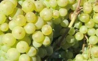 Виноград Краса Севера: описание и характеристики сорта, выращивание, плюсы и минусы