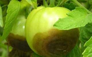 Фитофтора на помидорах: как бороться, лечение, обработка и опрыскивание