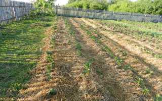 Выращивание картофеля под соломой или сеном: пошаговое описание метода с фото и видео