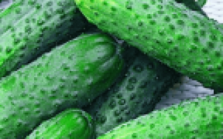 Какие огурцы лучше для засолки: название 30 лучших сортов для консервирования