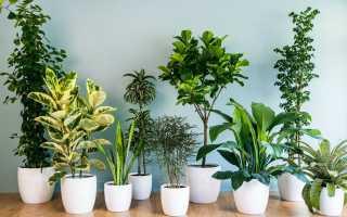 Лучшие комнатные растения для дома, подходящие для дома и семьи