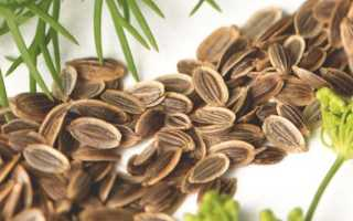 Семена фенхеля: лечебные свойства и противопоказания, особенности использования, фото