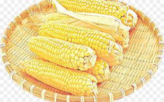 Норма высева кукурузы: как и когда сажать в открытый грунт семенами
