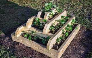 Ремонтантная клубника: сорта с описанием, размножение и выращивание, чем подкормить