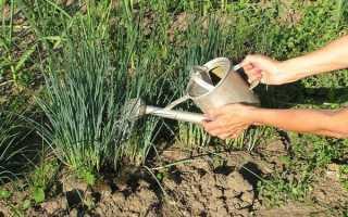 Нашатырный спирт для лука: как правильно полить и подкормить?