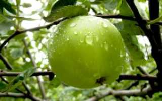 Как летом поливать яблони: частота и правила, сколько раз и можно ли холодной водой