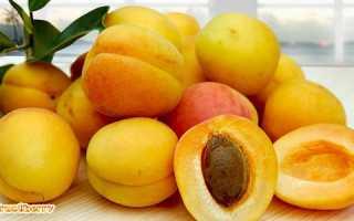 Абрикосы: польза и вред для здоровья человека, свойства и противопоказания